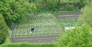 Groenteverbouwen, zaaicombinaties, wisselteelt, combinatieteelt