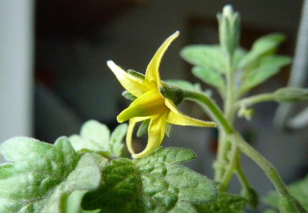 Week 8: Eerste bloemen komen tot bloei