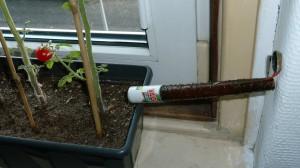 tomatenkweken_vliegjes