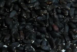 basilicum zaden