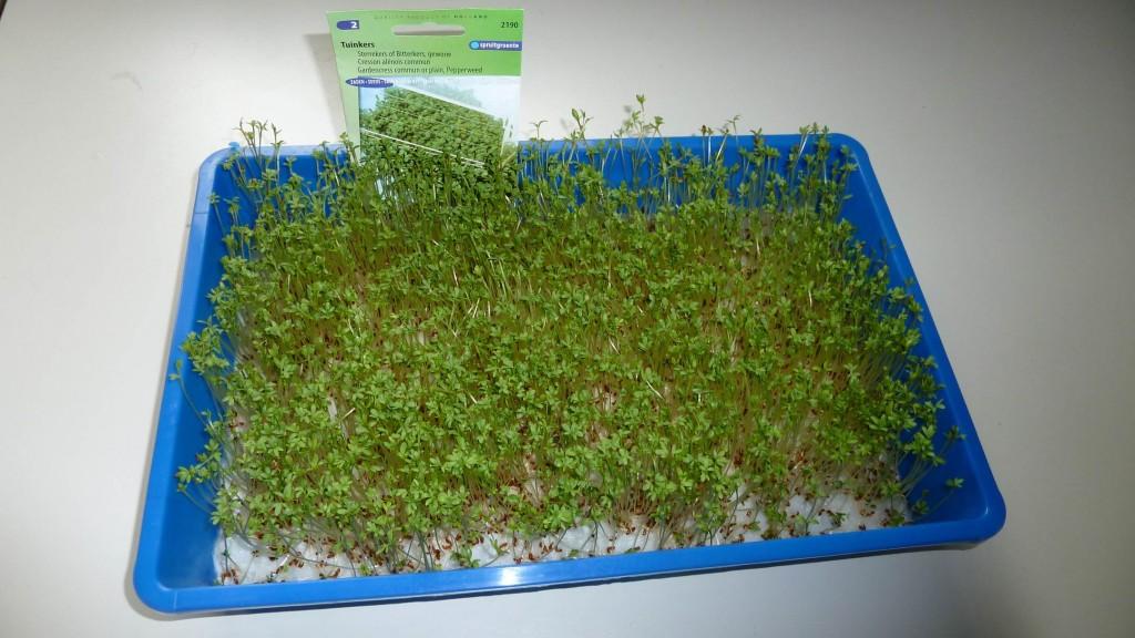 tuinkers garden seeds