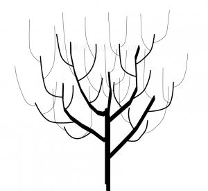 appelboom snoeien_4jaar
