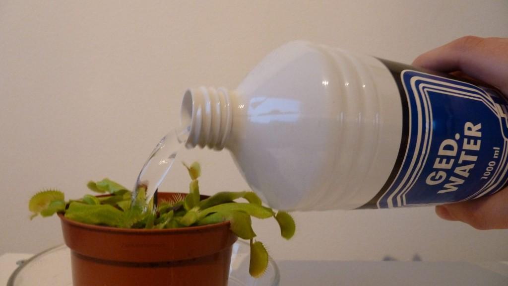 dem_water gedemineraliseerd water geven venus vliegenvanger Dionaea muscipula