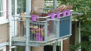balkonbakken-paars balkon bloembak kopen